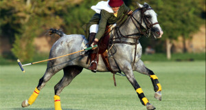 woman riding on a horse to hit a polo ball regulated equipment includes ball and mallet
